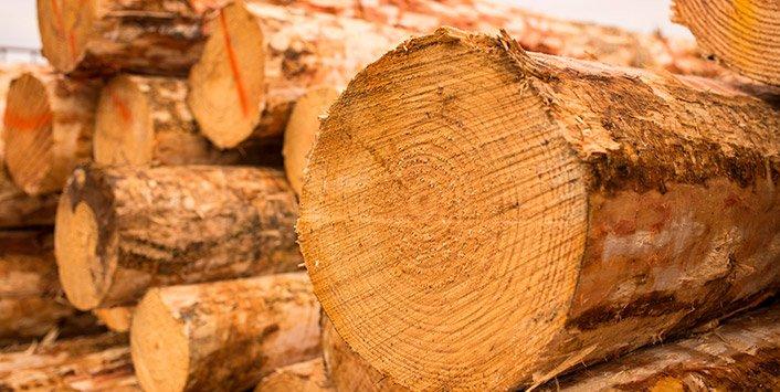 wood pile sawn logs